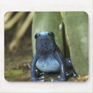 Blue Poison Dart Frog Mouse Pad