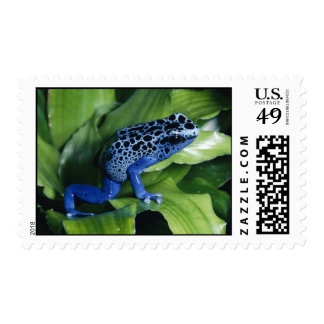 blue poison dart frog postage stamp