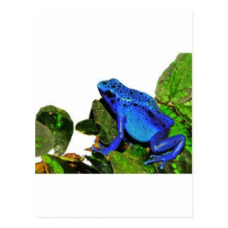 Blue Poison Dart Frog Postcard