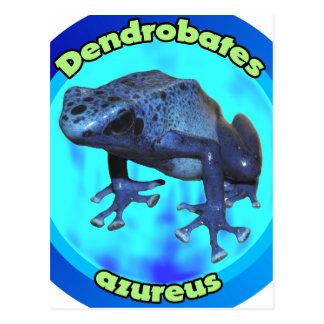 Blue poison dart frog. postcard