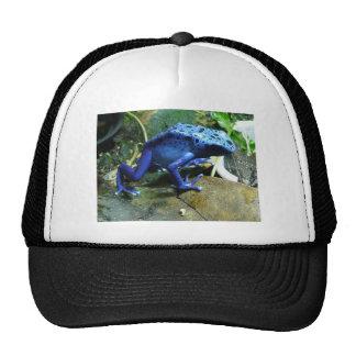 Blue Poison Dart Frog Trucker Hat