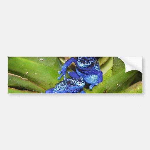 Blue Poison Dart Frogs In Leaf 1 Bumper Sticker