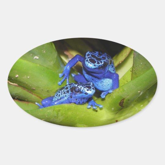 Blue Poison Dart Frogs In Leaf 1 Oval Sticker