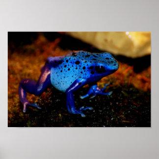 Blue Poison Frog Poster