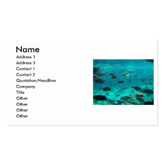 Blue pool of cichlids swimming around design business card