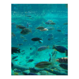 Blue pool of cichlids swimming around design poster