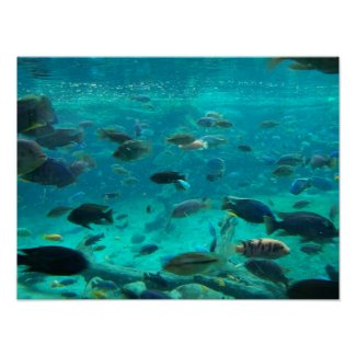 Blue pool of cichlids swimming around design print