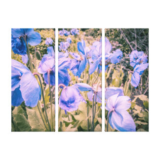 Blue poppies, himalayan poppies, three wall canvas