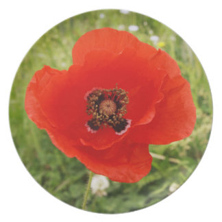 Blue Poppy Flower Melamine Plate