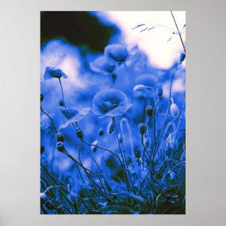 Blue poppy flowers poster