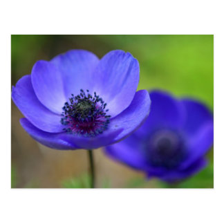 Blue Poppy Flowers Save The Date Postcards
