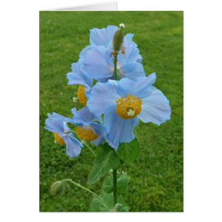 Blue Poppy (Meconopsis) Card