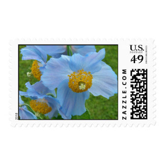 Blue Poppy (Meconopsis) Postage Stamps