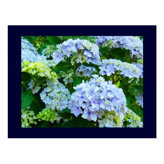 Blue postcards Floral Gardens Summer Hydrangeas