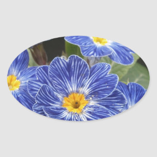 Blue Primula Flowers Oval Sticker