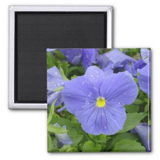 Blue/Purple Dew Kissed Pansy Magnet