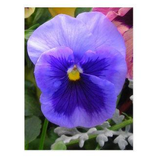 Blue/purple pansy postcard