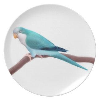 Blue Quaker Monk Parrot Plate