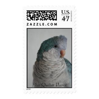 Blue Quaker Parrot Stamp
