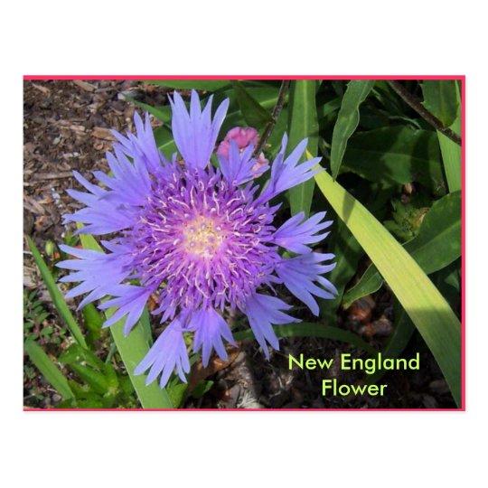 Blue Radiant Flower3, New England Flower Postcard