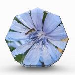 Blue Radicchio Flower N Bee Acrylic Award