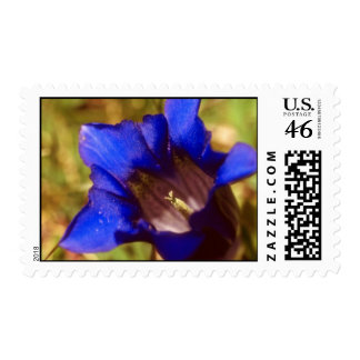 Blue Regal royal flowers Stamps