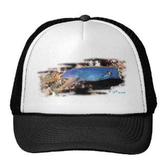 Blue Ribbon Eel Trucker Hat