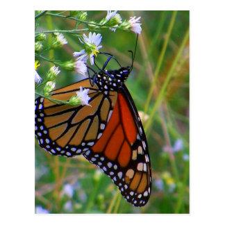 Blue Ridge Butterfly Postcard