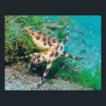 "Blue Ring Octopus Photo Print<br><div class=""desc"">One of Earth&#39;s most venomous creatures... .is also among it&#39;s most beautiful.</div>"