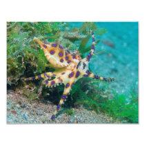Blue Ring Octopus Photo Print