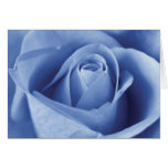 Blue Rose Cartoes