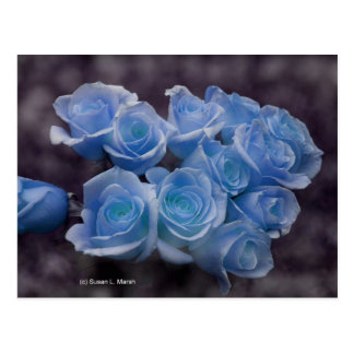 Blue Rose colorized bouquet spotted background Postcard