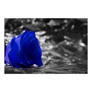Blue Rose On Left Side Silver Background Poster