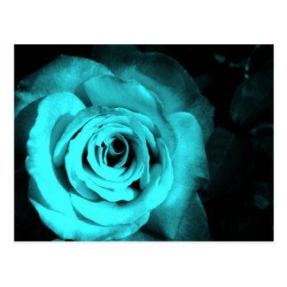 Blue Rose Postcard