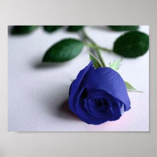 Blue Rose - Poster