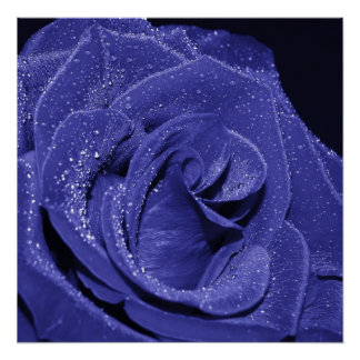 Blue Rose Posters