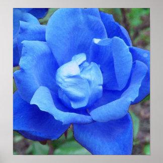 Blue Rose Print Poster