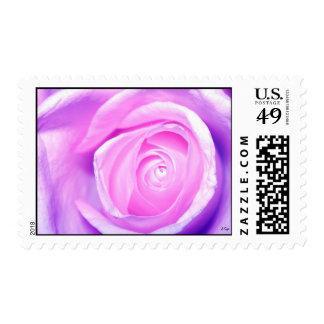 blue rose, S Cyr Stamps