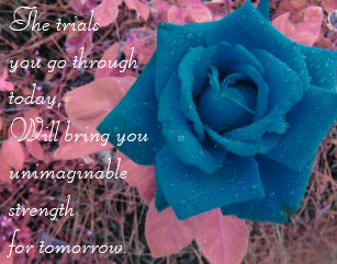 Blue Rose Quotes Gifts On Zazzle