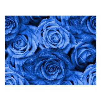 Blue Roses Postcard