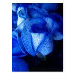BLUE ROSES POSTCARDS