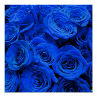 Blue Roses Poster