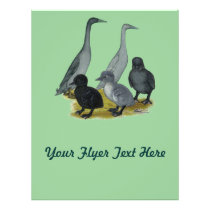 Blue Runner Duck Family Flyer