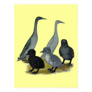 Blue Runner Duck Family Postcard