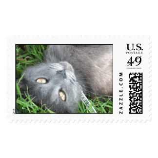 Blue Russian Cat Postage Stamp