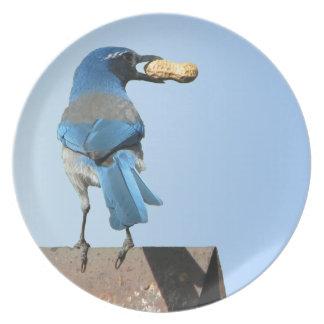 Blue Scrub Jay Bird & Peanut Plate