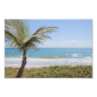 Blue Sea and Coconut Palm Photograph