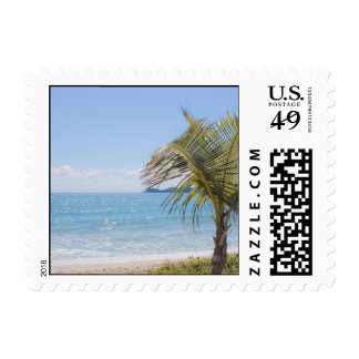 Blue Sea and Coconut Palm Photograph Stamp