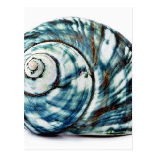 Blue Sea Shell On White Background Postcard