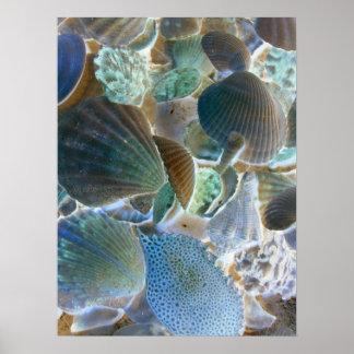 Blue Sea Shells Canvas Art Poster
